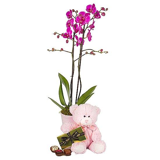 Kız Bebek Orkide  Ayıcık çikolata