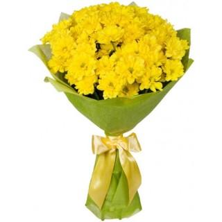 11 Dal Sarı Papatya