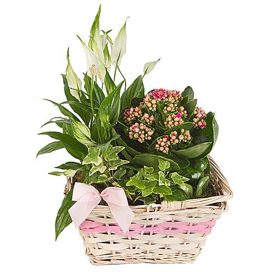 Mini Bitki Bahçesi