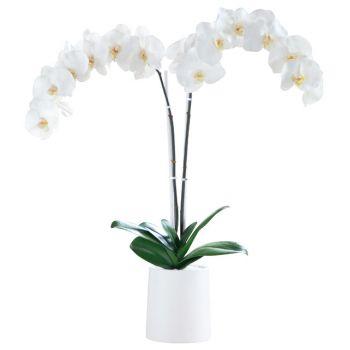 Beyaz Renkli Delux Saksı Orkide