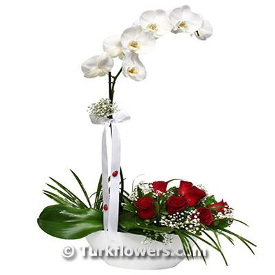 Saksı Orkide ve 7 adet kırmızı gül