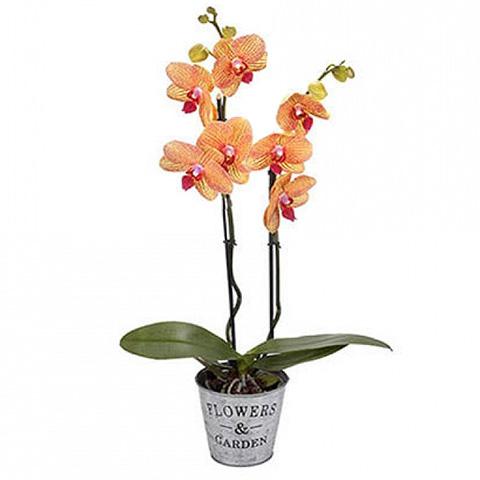 Turuncu Renkli Saksı Orkide