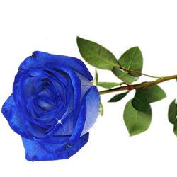 1 Adet Mavi Gül 📦