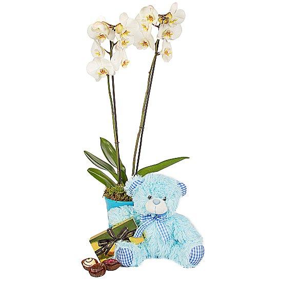 Erkek yeni Bebek için Orkide  Ayıcık çikolata