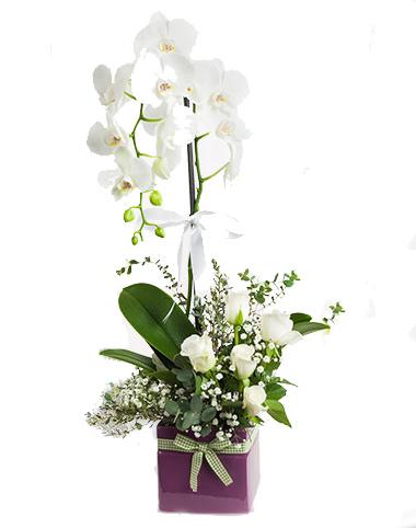 Beyaz Orkide ve Beyaz Gül Aranjman