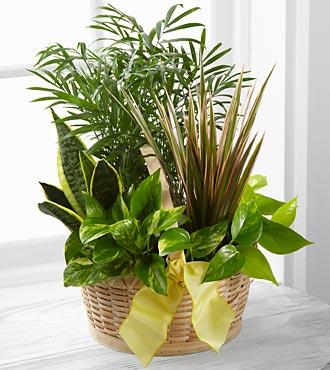 Bitki aranjmanı Yeni iş Tebrik çiçeği