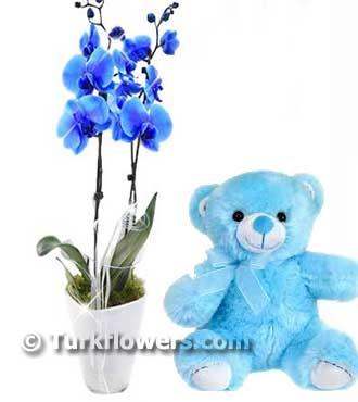 Çift Dallı Mavi Orkide ve Ayıcık