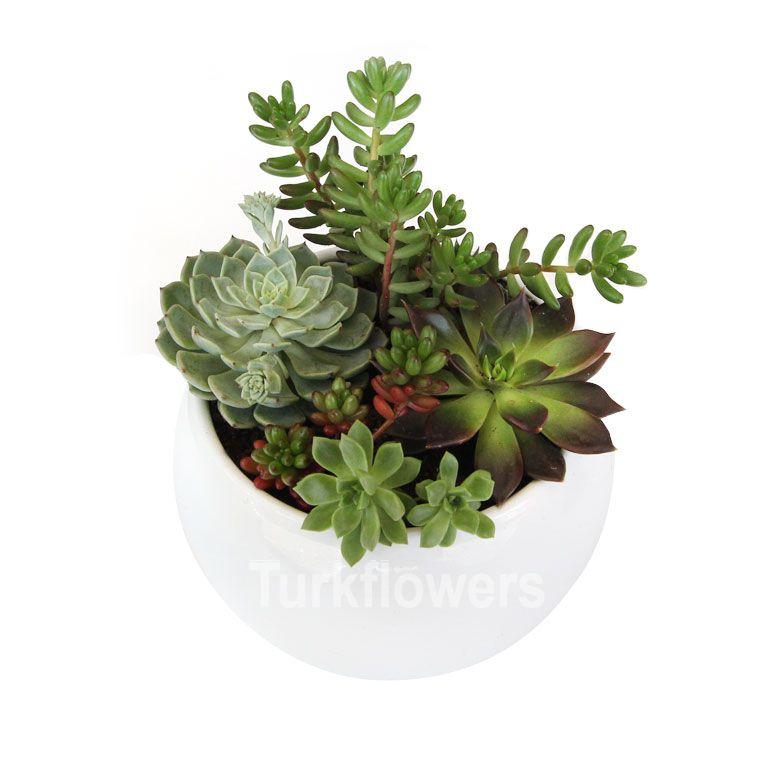 Succulent Aranjman