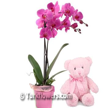 Çift Dalli Pembe Orkide ve Ayıcık