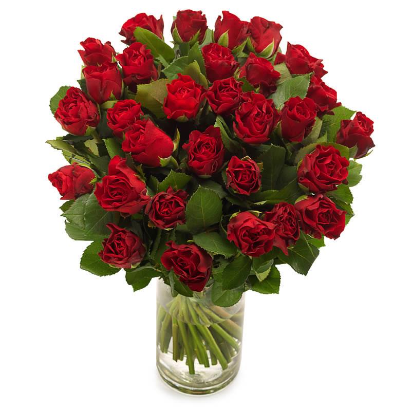 Muhteşem Koyu Kırmızı Güller