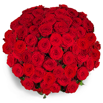 Muhteşem Kırmızı Güller