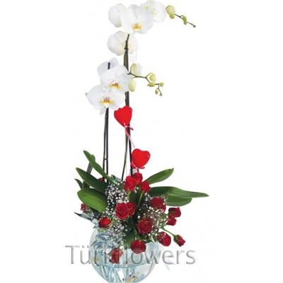 11 Adet kırmızı gül ve saksı orkide
