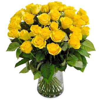 Birinci Sınıf Sarı Güller - İyimserlik