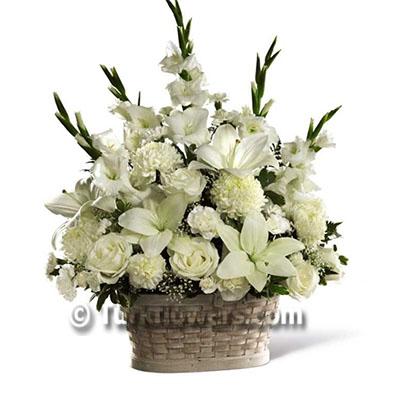 Beyaz Taziye  Çiçeği