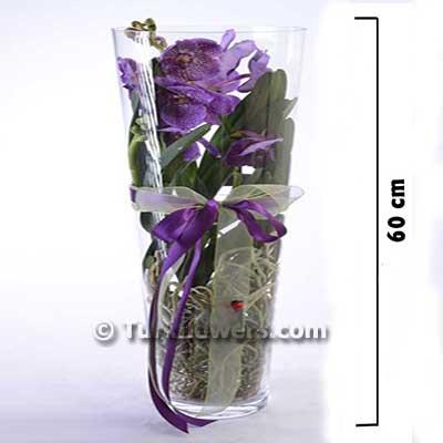 Vanda Orkide Mavi Renkli